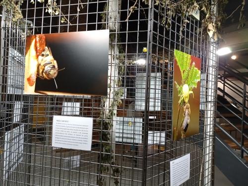 abeille4.jpg